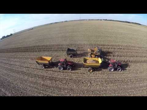 Picking Seed Corn near Cisco Illinois - September 2016