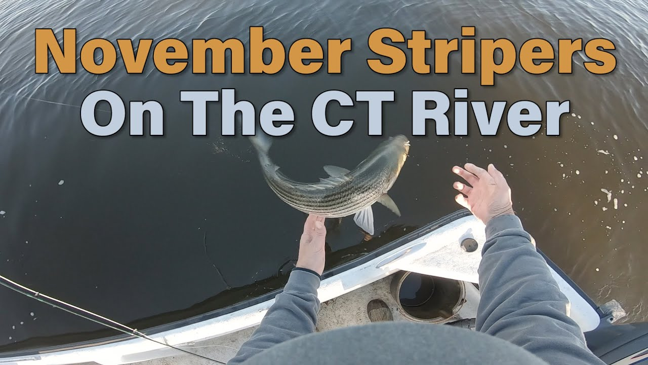 November Stripers in the CT River