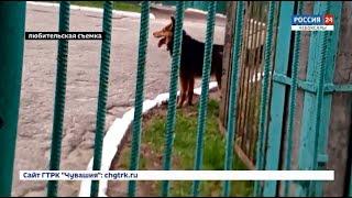 В Чебоксарах бродячие собаки оккупировали детский сад