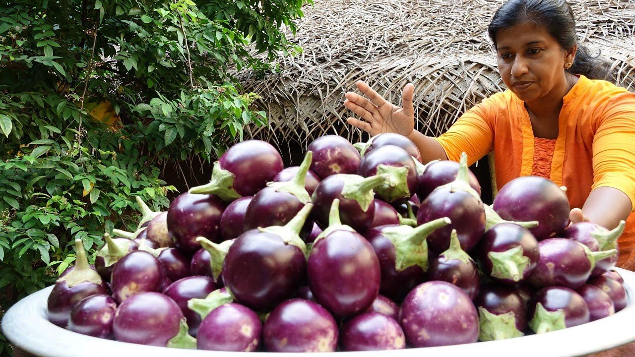 Eggplant Recipe ❤ Cooking Huge Eggplant (Brinjal) Curry in my Village | Village Life