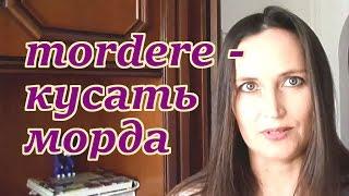 Похожие слова в русском и итальянском языках.