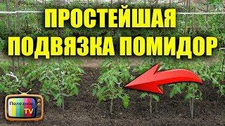 видео Подвязка томатов в открытом грунте: способы и советы.