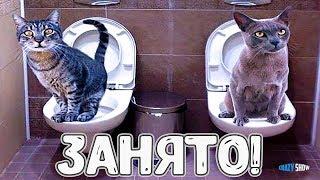 КОШКИ 2019 ПРИКОЛЫ С КОШКАМИ Смешные коты и котики 2019 Funny Cats #38