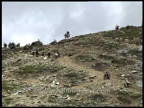 Ponies and pilgrims on trail - Amarnath Yatra