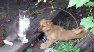 Кот-боксёр и щенок Харьков Boxer cat and puppy Kharkov