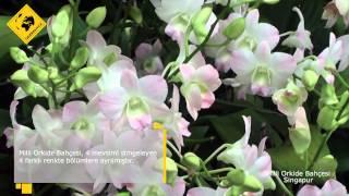 Singapur'da Gezilecek Yerler: Milli Orkide Bahceleri'nden Görüntüler