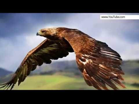 Год парящего орла наступил по юлианскому календарю в России - Видео с YouTube на компьютер, мобильный, android, ios