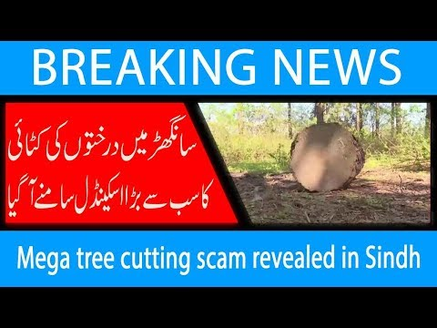 Mega tree cutting scam revealed in Sindh | 26 Oct 2018 | 92NewsHD