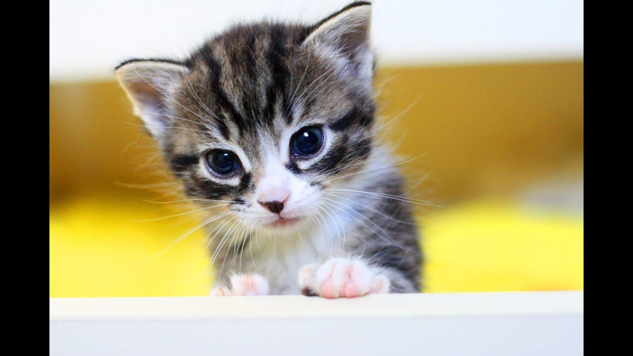 Тайная жизнь домашних животных. Смешное видео для детей с кошкой и котятами