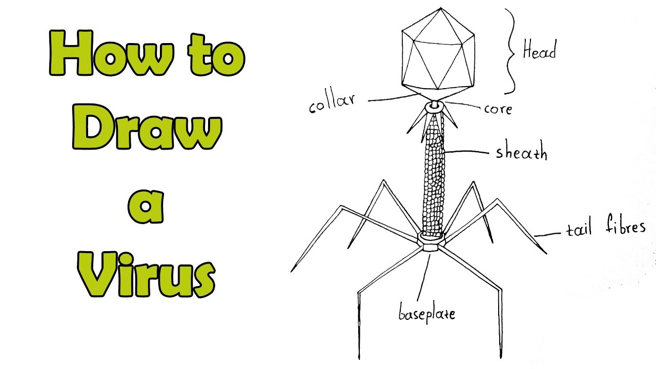How To Draw A Virus T4 Phage Easy For Kids