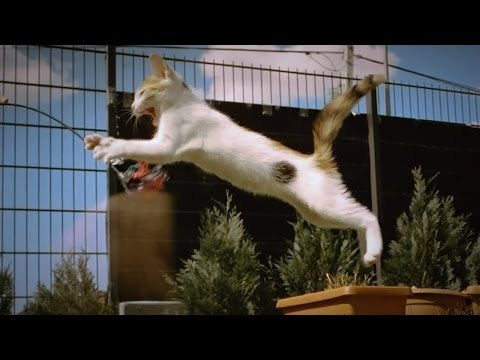[Betisier] Compil Chutes et fail de chats ! (compilation gag falls cat) !
