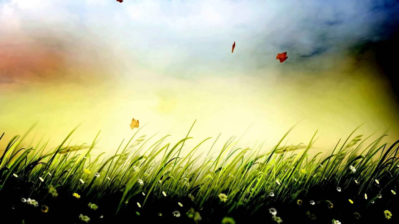 grass background hd clipart grass background video effects hd free stock 25fps video templates animation 1080p