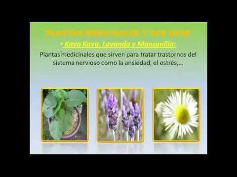 Plantas medicinales y sus usos descubre y aprovecha las for 10 plantas ornamentales y para que sirven