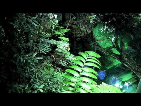 California Academy Of Sciences - New Version HD