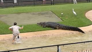 Australia Zoo Wildlife Warriors Show. The Croc Appears Part 3