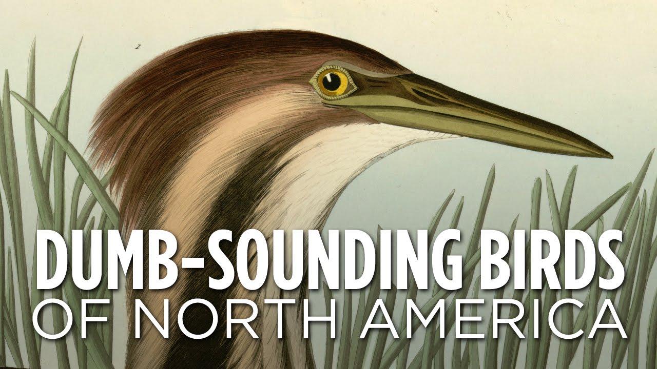 dumb-sounding-birds-of-north-america