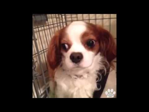 dog-shaming-the-best-compilation-of-dog-shaming-videos-and-vines!
