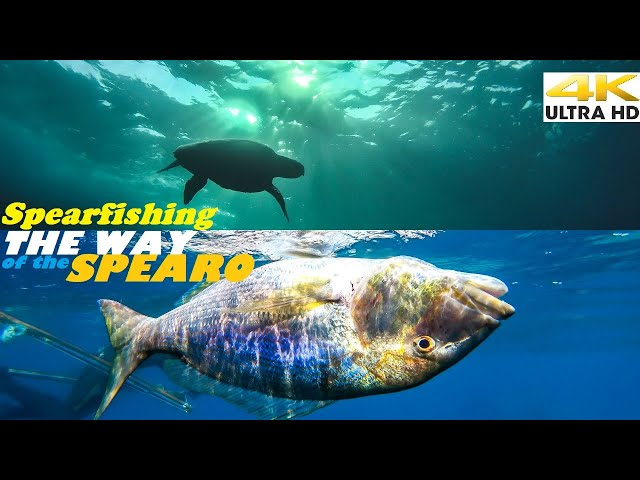 Spearfishing 🇬🇷 |🌊THIS IS WHY they ENVY US🔥CATCH and COOK-BBQ The GREEK WAY-Grouper/Dentex [4Κ]✅