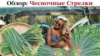 ТОП-8 рецептов блюд из Чесночных Стрелок. Выпуск 48