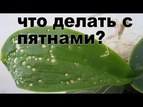 Пятна на листьях орхидеи что делать? Причины и лечение цветка!