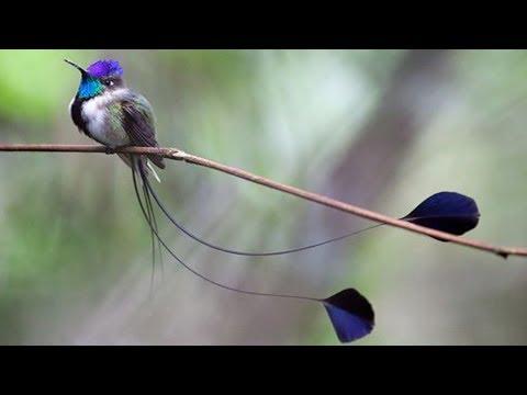 Beautiful Long Tailed Birds Youtube