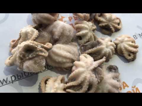 Молодые осьминоги