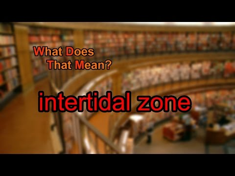 What does intertidal zone mean?