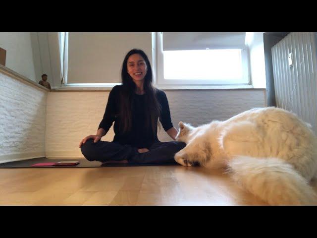 Mindfulness Meditation for the holidays