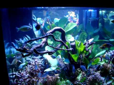Marineland Deep Dimension 150 Aquarium - YouTube