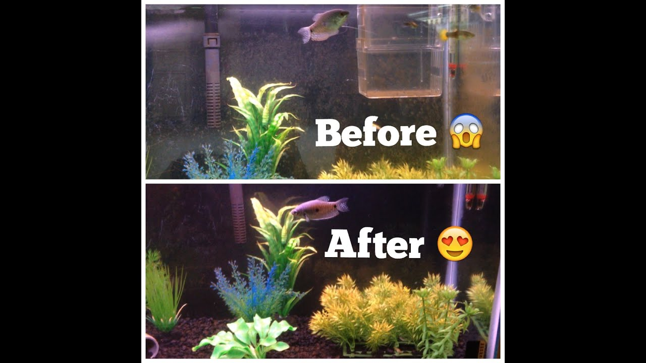 how to remove algae from fish tanks youtube