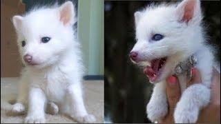 Mua chú cún con về nuôi, gần một năm Cô gái choáng váng mới biết danh tính thật của nó