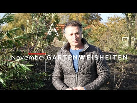 Wass macht mann im Garten in November? Herbst im Garten. Gartentips von Jurgen Smit.