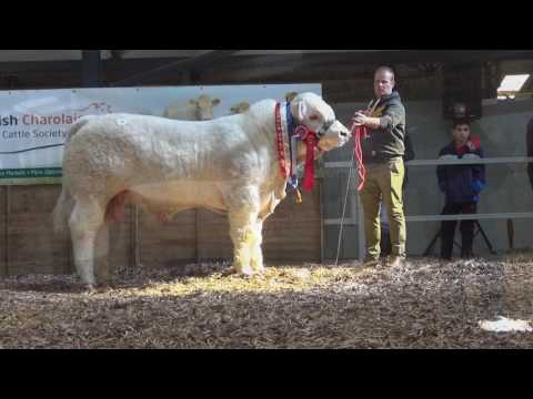 Charolais Society Show & Sale March 2017