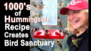AMAZING HUMMINGBIRD STORY-Tips Feeder Easy Recipe Nectar BUILDING Nest on Window Mom Feeding Babies