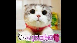Клички для котят самые красивые и необычные.