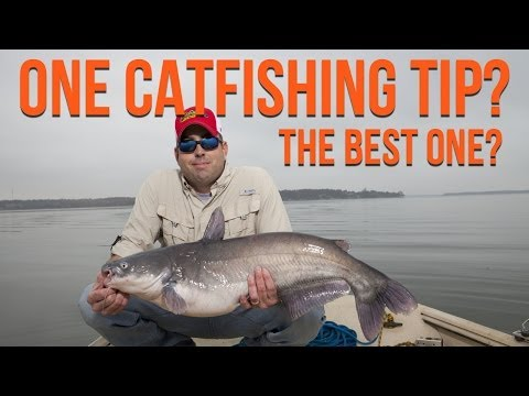 One Catfishing Tip? Your Best Catfish Fishing Tip? from YouTube · High Definition · Duration:  2 minutes 45 seconds  · 8,000+ views · uploaded on 6/12/2014 · uploaded by Catfish Edge