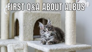 Q&A About Our New Maine Coon Kitten (Albus)!