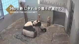☆Cute Panda☆ #17  シャンシャン ママとじゃれ合う♡