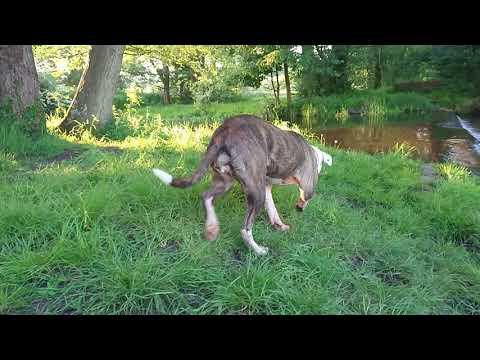 Lola at the River Mimram