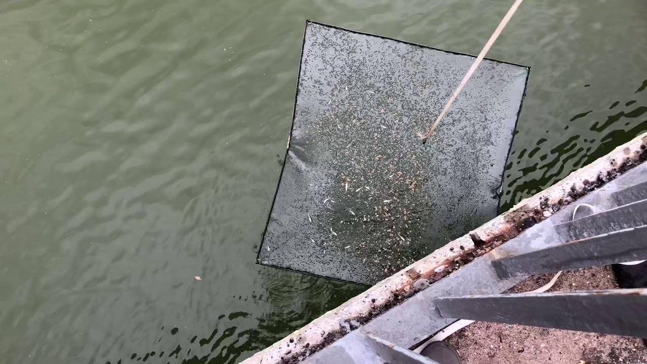 Паук для рыбалки своими руками фото 820