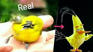 Look alike the birds of Angry Birds/Real Life angry birds