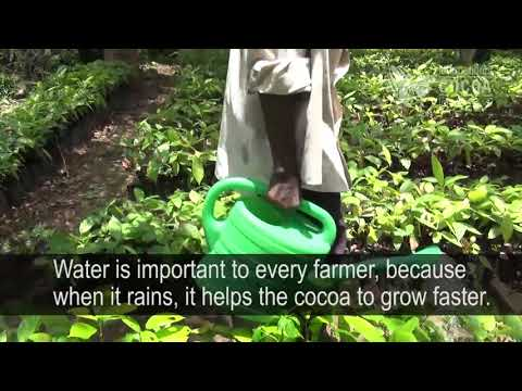 The answer is in nature: what is water to a cocoa farmer