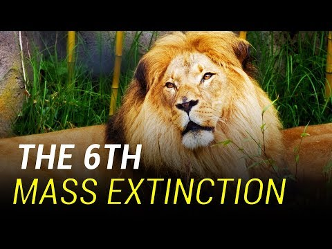 The 6th Mass Extinction Has Begun