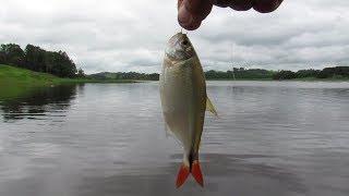 Pescando lambari com miçanga