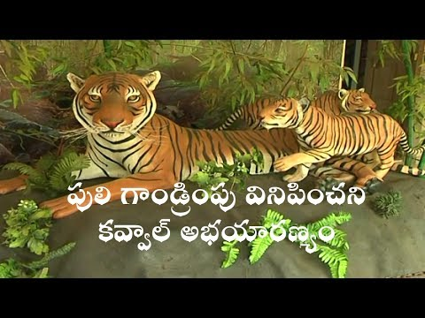 No Roar of Tiger | in Kawal Wild Life Sanctuary | An Investigative Story
