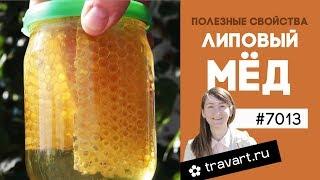 Липовый мед польза. Свойства. Цвет. Кристаллизация. Противопоказания. Рецепты для здоровья из меда.