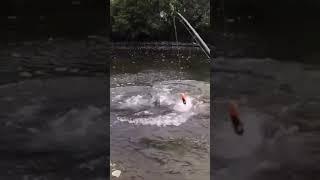 Лучшее видео про рыбалку ЖЕСТЬ ОГРОМНЫЙ СОМ Tik Tok shorts