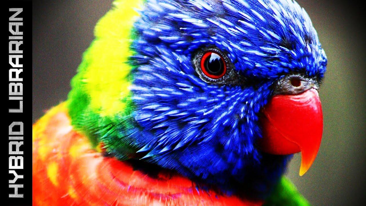 Worlds Most Intelligent Animals YouTube - 25 intelligent animals world