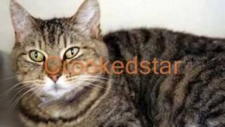 Warrior cats of Starclan
