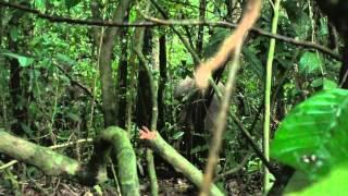 Dag 3 en 4 van onze reis: Borneo - Kinabatangan